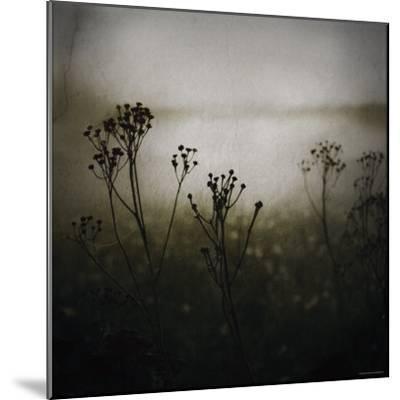 Study of Stems-Ewa Zauscinska-Mounted Photographic Print