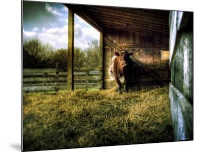 Mama-Stephen Arens-Mounted Photographic Print