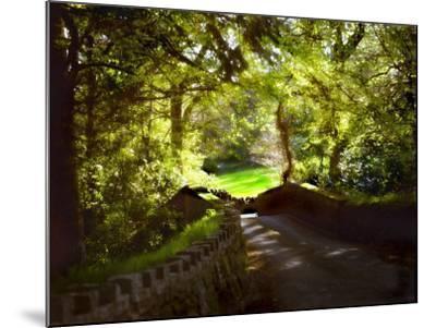 Devonshire Idyll-Jody Miller-Mounted Photographic Print