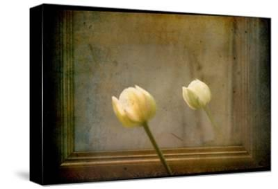 White Tulip against Framed Mirror-Mia Friedrich-Stretched Canvas Print