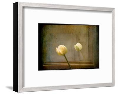 White Tulip against Framed Mirror-Mia Friedrich-Framed Photographic Print