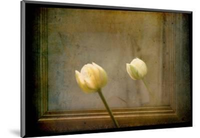 White Tulip against Framed Mirror-Mia Friedrich-Mounted Photographic Print