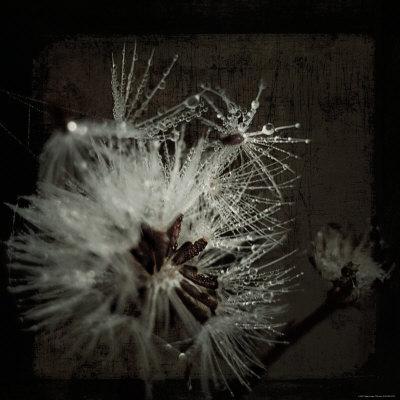 Dandelion in Dew-Ewa Zauscinska-Framed Photographic Print
