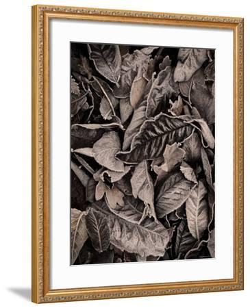Sepia Leaves-Tim Kahane-Framed Photographic Print