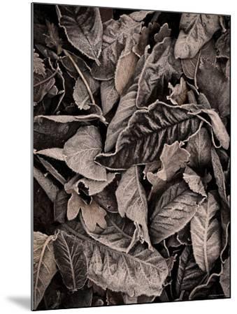 Sepia Leaves-Tim Kahane-Mounted Photographic Print