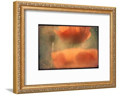 Study of Orange Poppies-Mia Friedrich-Framed Photographic Print