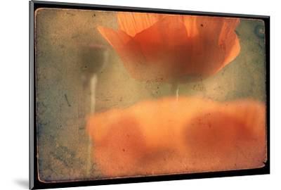 Study of Orange Poppies-Mia Friedrich-Mounted Photographic Print