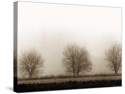Trees-Monika Brand-Stretched Canvas Print