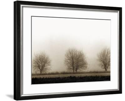 Trees-Monika Brand-Framed Photographic Print