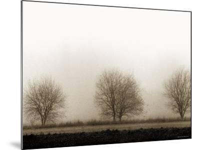 Trees-Monika Brand-Mounted Photographic Print