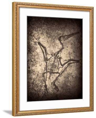 Pterodactylus Kochi-Clive Nolan-Framed Photographic Print