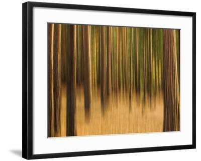 Zadel-David Baker-Framed Photographic Print