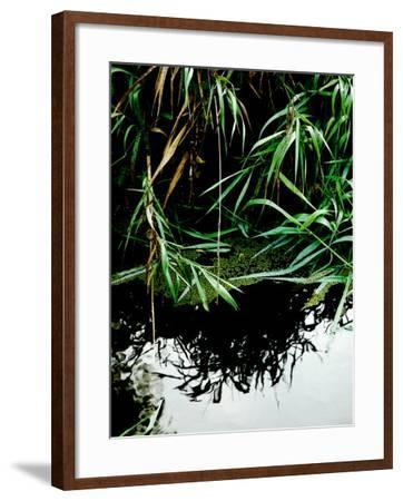 Wordbridge-Tim Kahane-Framed Photographic Print