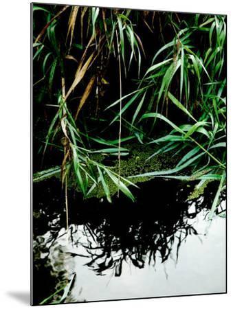 Wordbridge-Tim Kahane-Mounted Photographic Print