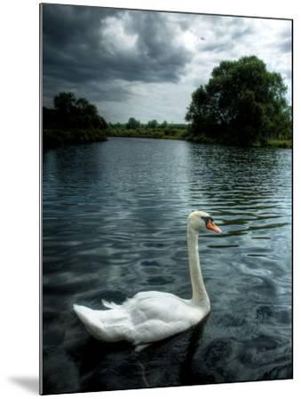 Buzzset-Tim Kahane-Mounted Photographic Print
