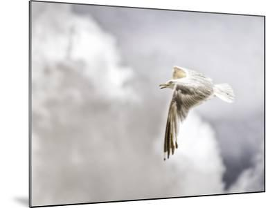 Gull-Stephen Arens-Mounted Photographic Print