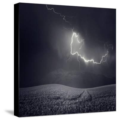 Zootz-Luis Beltran-Stretched Canvas Print
