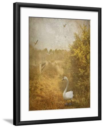 Buzzbird-Lynne Davies-Framed Photographic Print