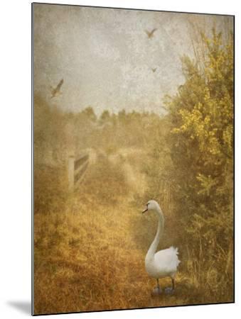 Buzzbird-Lynne Davies-Mounted Photographic Print