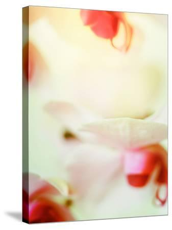 Study of an Orchid-Mia Friedrich-Stretched Canvas Print