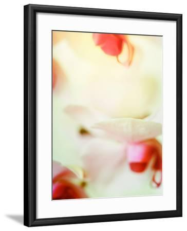 Study of an Orchid-Mia Friedrich-Framed Photographic Print