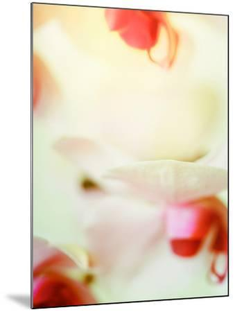 Study of an Orchid-Mia Friedrich-Mounted Photographic Print