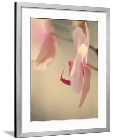 Study of an Orchid VII-Mia Friedrich-Framed Photographic Print