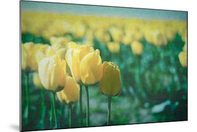 Yellow Tulip Field--Mounted Photographic Print