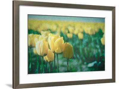 Yellow Tulip Field--Framed Photographic Print