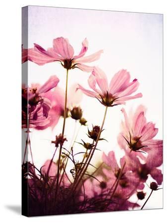 Her Secret Garden-Susannah Tucker-Stretched Canvas Print