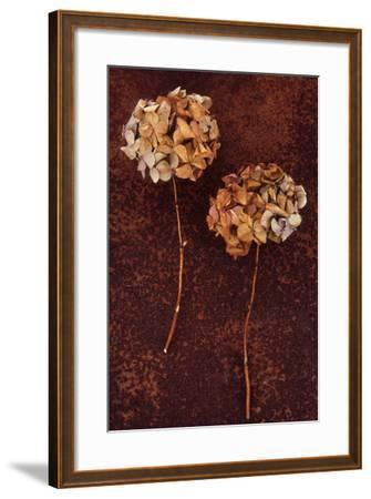 Hydrangea-Den Reader-Framed Photographic Print