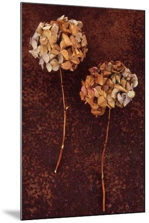 Hydrangea-Den Reader-Mounted Photographic Print