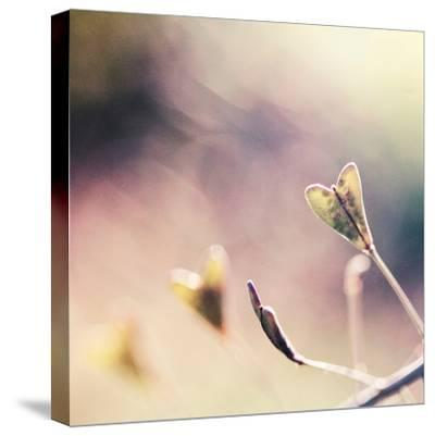 About You-Maria J Campos-Stretched Canvas Print