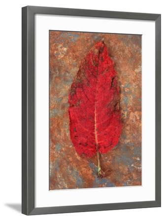 Turning-Den Reader-Framed Photographic Print