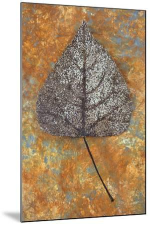 Close Up of Brown and Bleached Autumn or Winter Leaf of Black Poplar or Populus Nigra Tree-Den Reader-Mounted Photographic Print