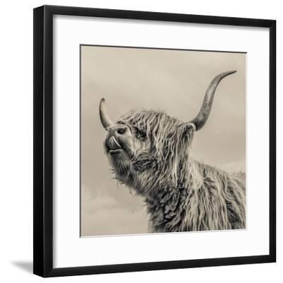 Highland Cattle-Mark Gemmell-Framed Premium Photographic Print