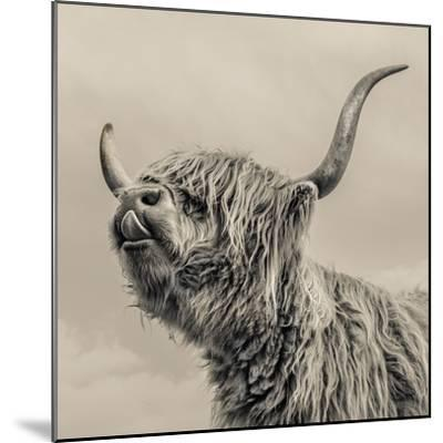 Highland Cattle-Mark Gemmell-Mounted Photographic Print