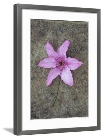 Purple Flower-Den Reader-Framed Photographic Print