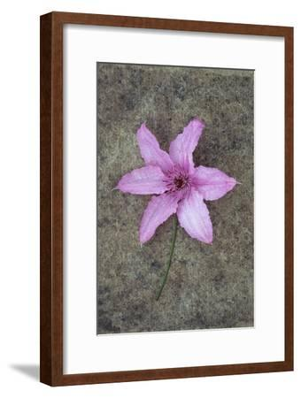 Purple Flower-Den Reader-Framed Premium Photographic Print