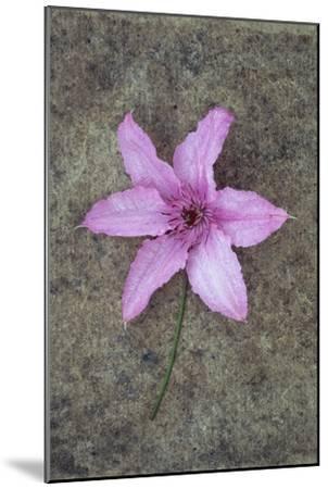 Purple Flower-Den Reader-Mounted Premium Photographic Print