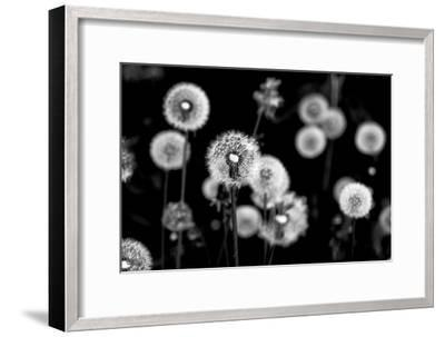 Whispers of Spring-Henriette Lund Mackey-Framed Photographic Print