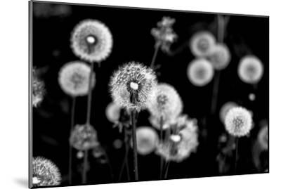Whispers of Spring-Henriette Lund Mackey-Mounted Photographic Print