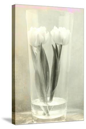 White Tulips-Mia Friedrich-Stretched Canvas Print