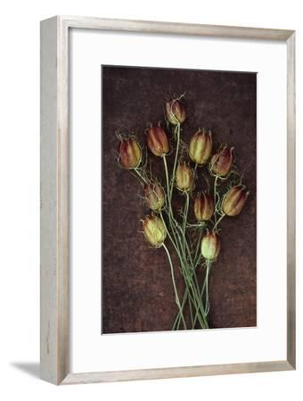 Seed Heads-Den Reader-Framed Photographic Print