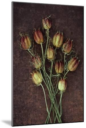 Seed Heads-Den Reader-Mounted Premium Photographic Print