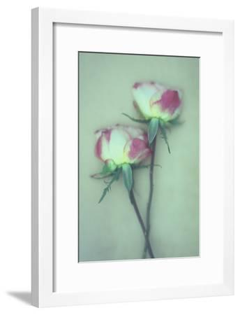 Dried Flower-Den Reader-Framed Premium Photographic Print