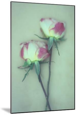 Dried Flower-Den Reader-Mounted Premium Photographic Print