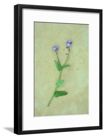 Single Flower-Den Reader-Framed Photographic Print