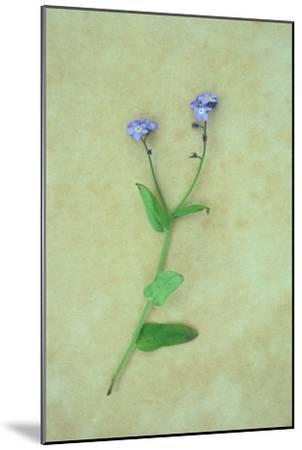 Single Flower-Den Reader-Mounted Photographic Print