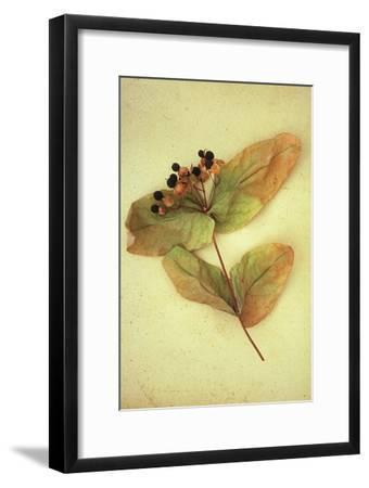 Dried Plant-Den Reader-Framed Premium Photographic Print